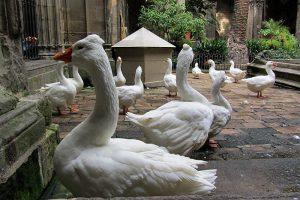 shbarcelona-cattedrale-barcellona