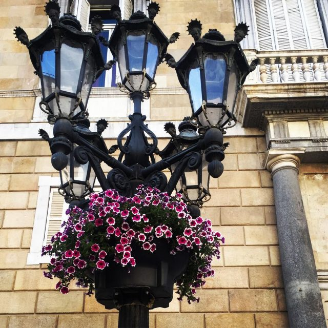 Beautiful flowers on a cloudy day barcelona barriogotico gothic centrohellip