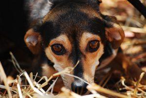 shbarcelona-adottare-cani-barcellona