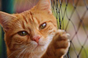 shbarcelona-adottare-gatti-barcellona