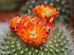 shbarcelona-piante-cactus