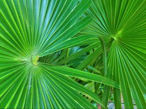 shbarcelona-piante-palma