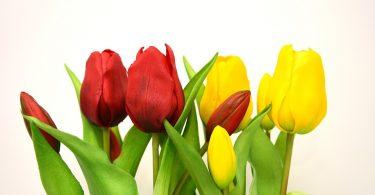 shbarcelona-fiori-artificiali