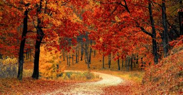 shbarcelona-autunno
