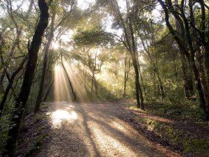 """alt=""""sentiero in un bosco"""""""