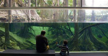 """alt=""""padre e figlio davanti ad acquario"""""""